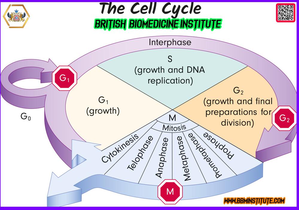 #British #BioMedicine #Institute #Evidence #Skill #eLearning #Platform #bbminstitute #bbmclinicaltrials #britishbiomedicine #bjpmr #bjbmr #BBMI #BSCR #BSMD #BBMCT #BBM #PHM #CTPRA #CCP #MDRA #BSCCP #BBMI #NanoDegree #Pharmaceutical #BioMedical #Clinical #Research #Medical #Device #Skilled #NanoDegree #Clinical #Trials, #Pharmacovigilance #Regulatory #Affairs #Clinical #Child #Psychology #Medical #Device #Regulatory #Affairs #Public #Health #Management #BritishYogaHealth® #BritishChildPsychology #BritishBioMolecule #BritishBioMedicineClinicalTrials #BritishYogaHealth #EvidenceBasedSkills #ExclusiveAIIMSHospital #Dermatologytrials #CardiovascularTrials #DiabetesTrials #OncologyTrials #HematologyTrials #PediatricTrials #CovidTrials #NeuroScienceTrials #GyneacologyTrials #GastroenterologyTrials #RareDiseaseTrials #AutoImmuneTrials #InfectiousDiseaseTrials #EndocrineTrials #OpthalmologyTrials #NephrologyTrials #ConductClinicalTrials #directorbbmclinicaltrialscom #checkyourplagiarism #NewApprovedDrug #YogaTeacherTrainingProgram #YTTP #BYH #50YTTP #100YTTP #200YTTP #300YTTP #500YTTP #BritishSchoolOfClinicalResearch #BritishSchoolOfClinicalChildPsychology #BritishSchoolOfMedicalDevice #BritishSchoolOfYogaHealth #YogaProfessor #AIIMSDelhi #AIIMSRishikesh